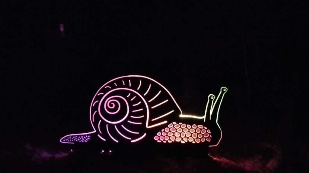 This snail didn't make it home before dark, but illuminates the way for others. Photo credit Jeppe Carlsen