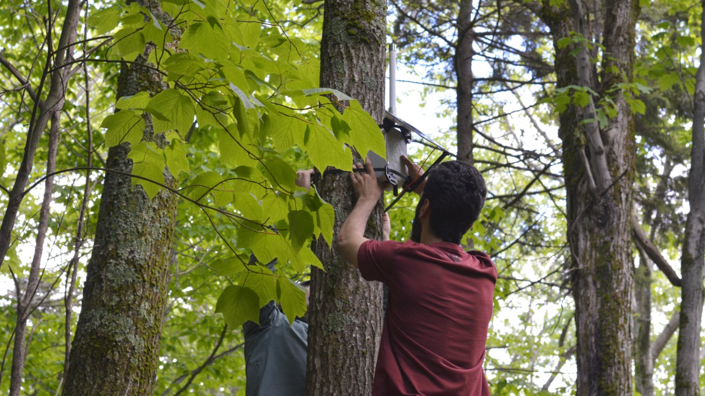 Image showing the deployment of a sensing device in the heart of the forest — a tree truck feet above the forest floor.
